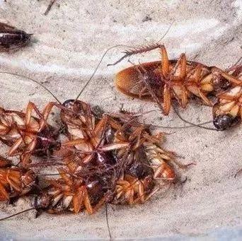 家里的蟑螂最怕这碗水,放到厨房卫生间,不到两天,蟑螂全不见了