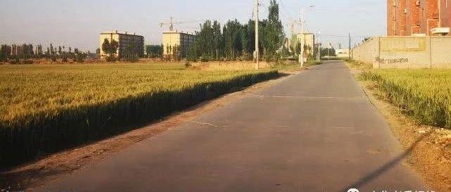 """亚游官方网試炮營""""麥浪大道""""帶你走進溫柔鄉"""