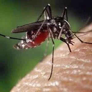 """三伏天的蚊子泛滥,教你一个方法,让你远离蚊子""""骚扰"""""""