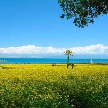 """惊喜:宁波、青海湖,天空之镜""""...首开直飞航班!"""