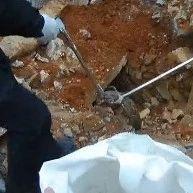 村民上山修墓,挖出了两条大蛇!