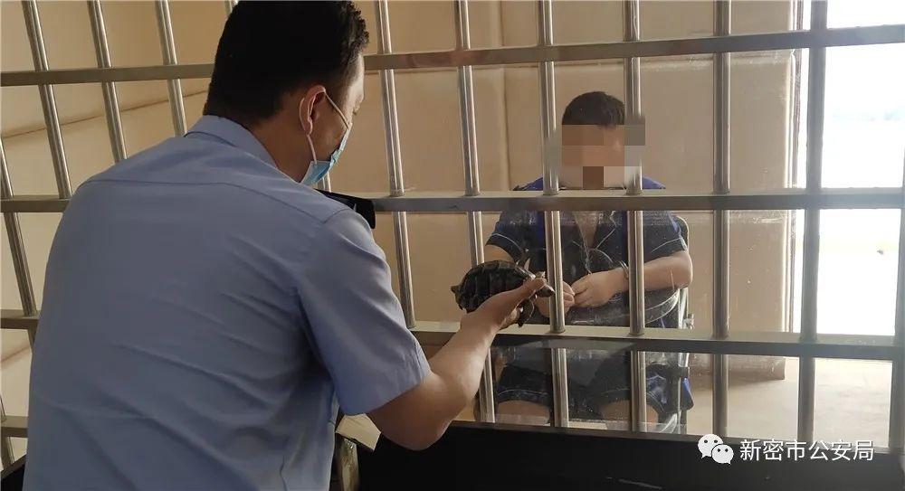 新密一男子买卖乌龟被拘留,非法收购珍贵、濒危野生动物罪了解一下