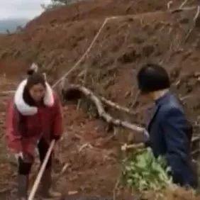 金沙平台邻县有人挖山种脐橙,惊动最高检!