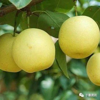 [健康�Y�]秋天吃�@五�N水果,�A防感冒!