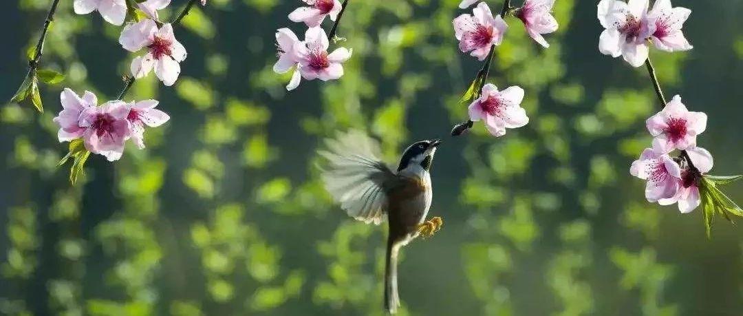 今日春分:吹醒万物,吹生蓬勃与希望