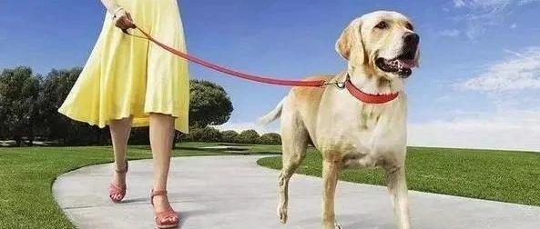【最新消息】5月1日起,出门遛狗一定要拴绳,不然后果很严重!