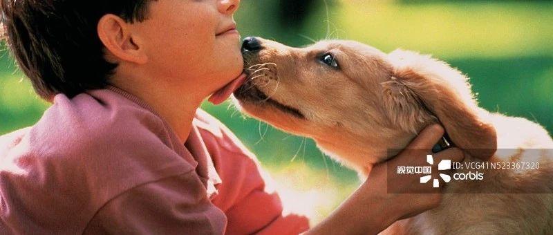 小狗舔伤口致9岁男童狂犬病死亡?真相来了