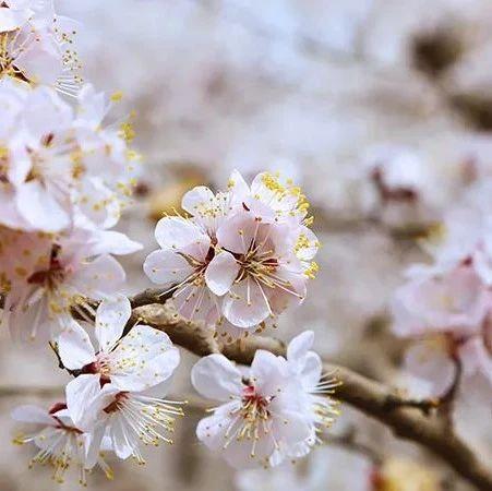 旅游兴疆|四月的新疆,美得刚刚好