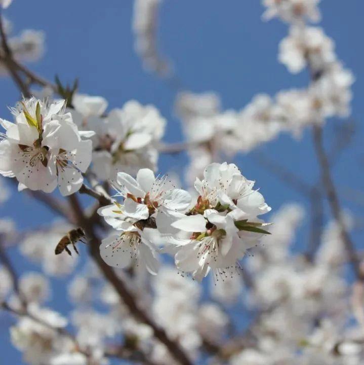 旅游兴疆 踏青赏花何须远,不负花城好春色