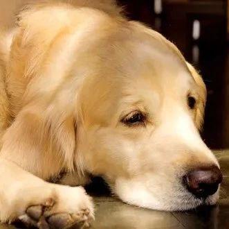 当安乐死针头刺入狗狗,它在想什么,兽医:请务必看着它闭上眼!