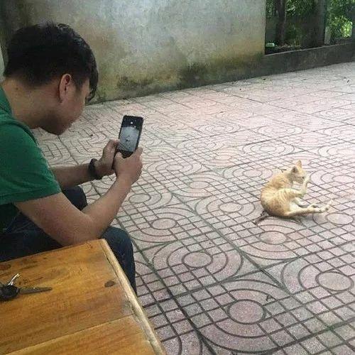男子看到地上的橘猫很可爱,于是拿出手机拍摄,没想到它一回头...