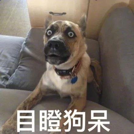 带狗做绝育,却被宠物医院里的锦旗笑出猪叫声...