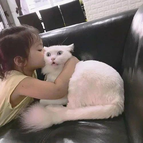 小女孩搂着猫,要亲猫,而猫的反应让人看了笑趴了,哈哈...