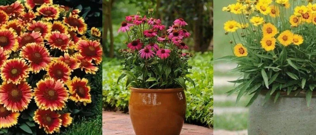 夏天在家里布置这15种耐旱植物,能适应暴晒和高温,不用常打理