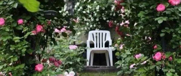 花香盈袖,春色�M�@,有��小院,悠然到老