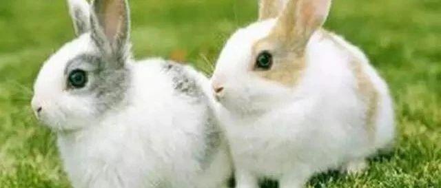 最新肉兔、獭兔价格表,2019年07月16日最新整理~~