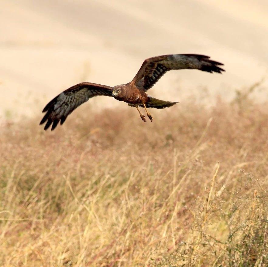 """""""鸟痴""""王大庆:10余年间在威尼斯人网上娱乐首页记录鸟类292种"""