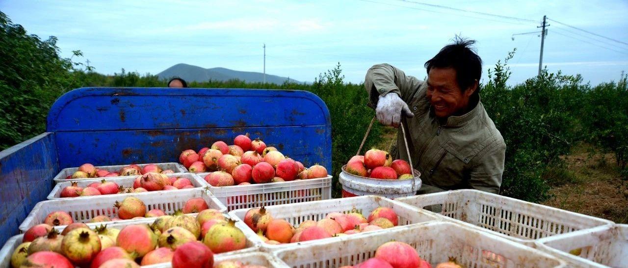 """汝州农业发展有妙招,""""新三农""""让农村迎来发展新机遇!"""