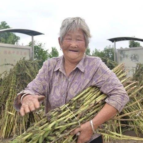 这里是汝州!农民丰收季里最美的笑脸,都在这了……