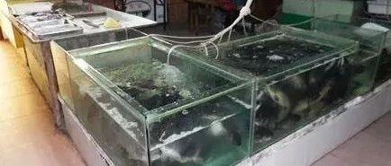 """喜欢吃鱼的注意!安徽发现这种""""毒鱼"""",吃多了伤肝脏!"""