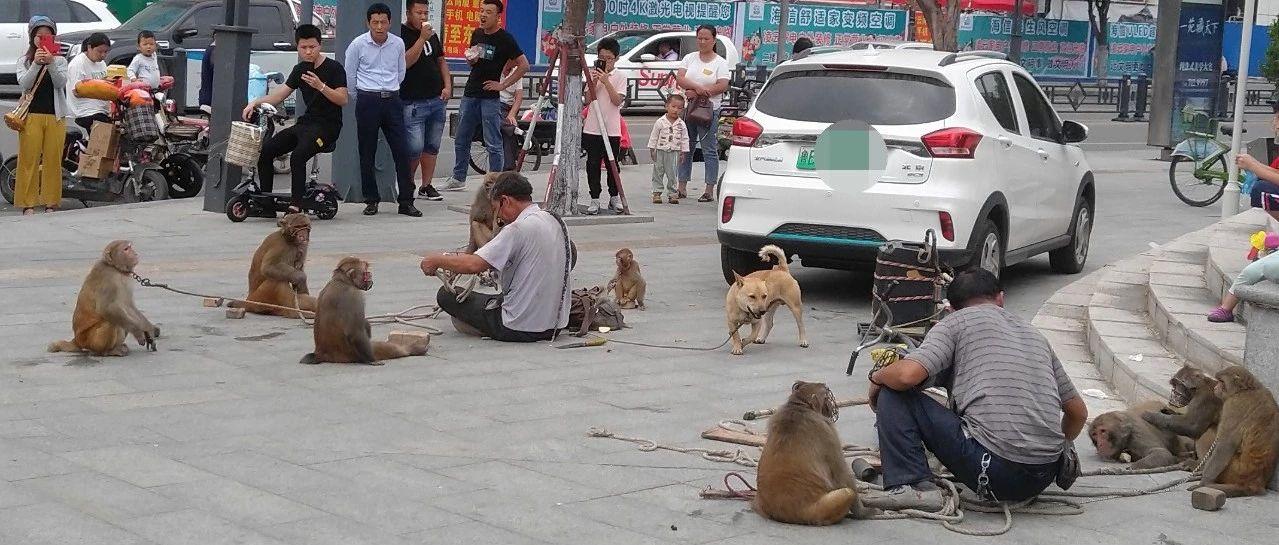【所见】猴的自由,谁给?