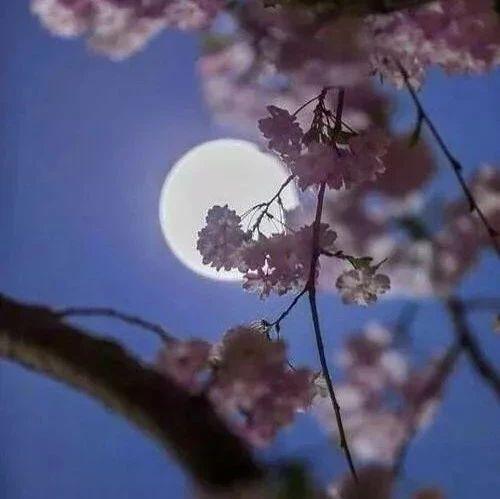 全套《春江花月夜》,美到心窝,听到心醉!