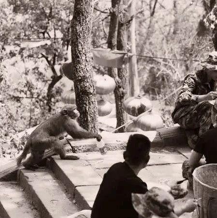 大火�^后,猴子回到山上,�c西昌救火民兵一同午�