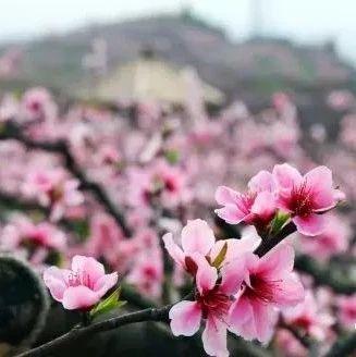 春游蓬溪,这些花海盛地必将令你流连忘返!