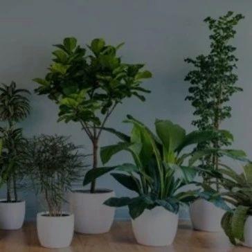 吸甲醛最好的植物排行榜来了,第一名居然是它,看完快告诉家人