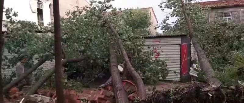 襄阳昨晚遭遇10级大风!大树刮断、通行受阻、有人被砸…