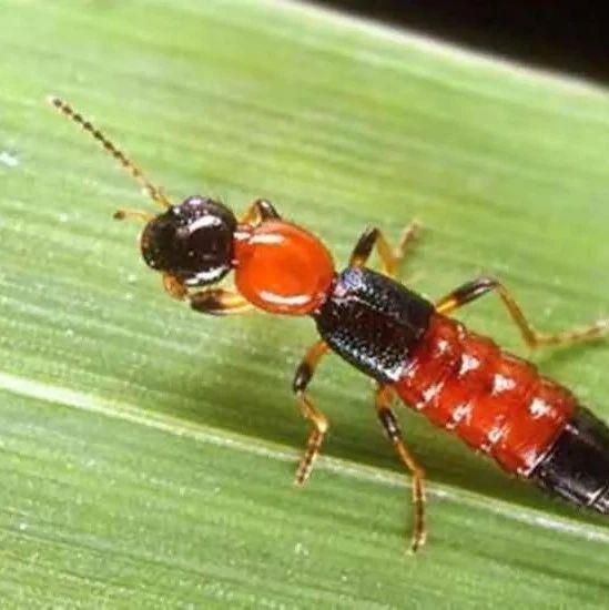 这种小虫将进入活跃期,停留在皮肤上千万别拍打