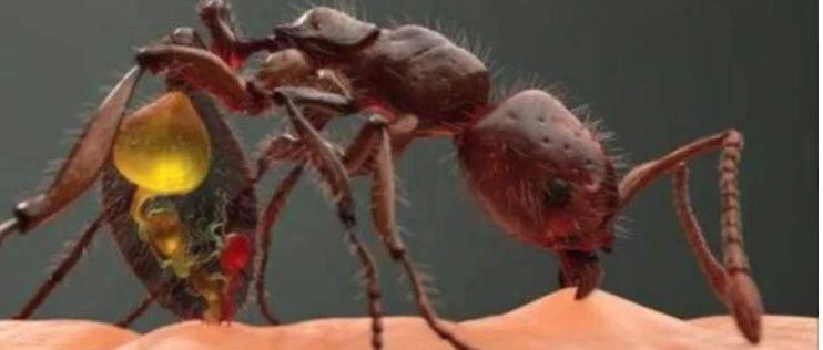 见到了请远离!红火蚁已传播至我国12个省份!