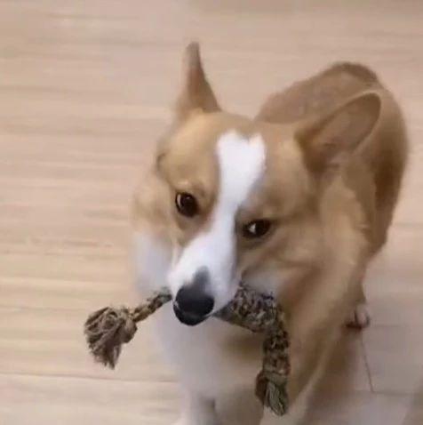 来拿啊,我不给你!来拿啊,我还不给你……这只狗子要被揍了