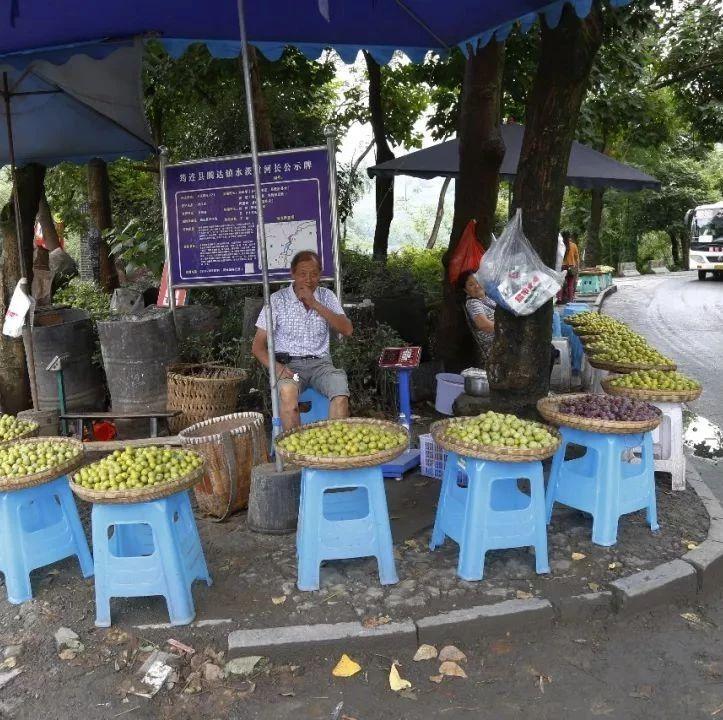 筠连李子虽然获得丰收,但是果农们却在急迫寻找销路!