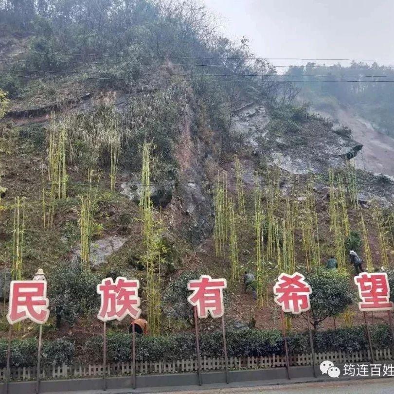 我们筠连会变得越来越美丽,现在开始进行竹林景观的打造了!