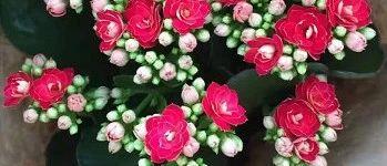 筠连女性朋友们的专属福利~美丽的鲜花免费送给美丽的您!