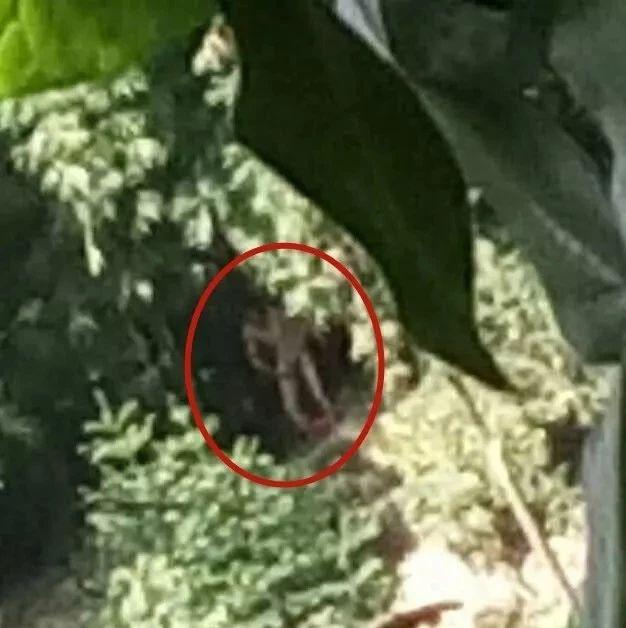 变态!宜宾60岁老人赤身裸体,在竹林里猥亵3名少女
