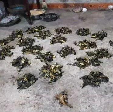 刑事拘留!筠连龙镇一村民家中查获400多只野生鸟死体