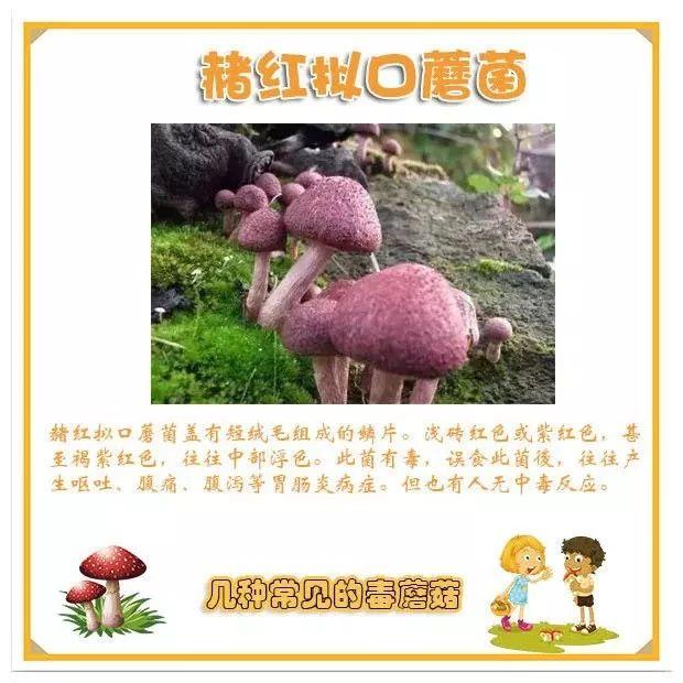 紧急提醒!四川连发野生毒蘑菇中毒事件,千万不要随意采摘野生蘑菇!