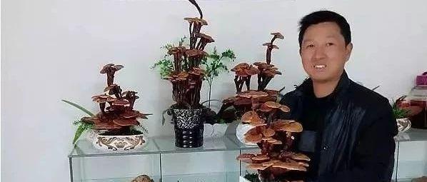 这个筠连人又在塘坝乡做了一件大事,他要做西南灵芝大王!
