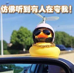 """注意!车上悬置""""小黄鸭""""涉嫌违法!已有多人被罚"""