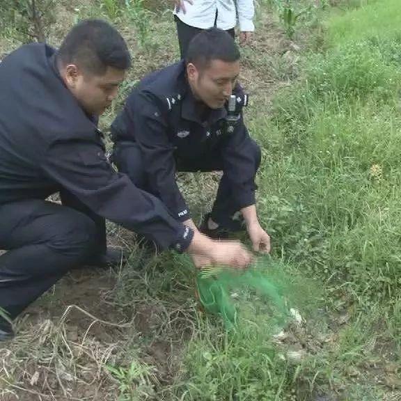 筠连县森林公安局将450余只青蛙放归大自然!