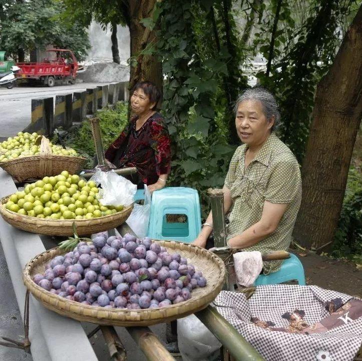 """筠连县水茨村的""""江安李""""增产不增收,当地果农发愁..."""
