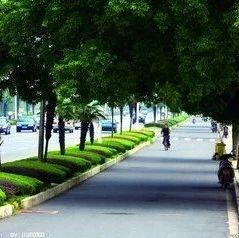 筠连将进行人行道绿化树的修剪,请大家注意安全!