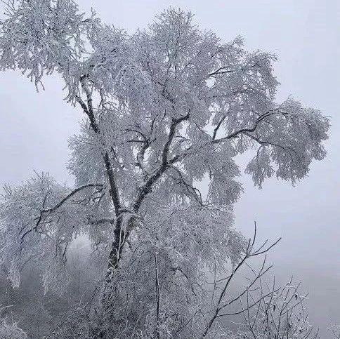 陇南这个小山村,竟藏着一个冰雪世界~