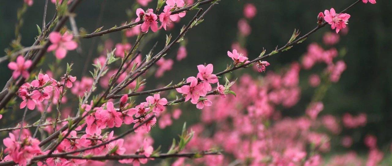 美爆!南城这里的桃花已成海,咱们一起去看看这花花世界吧!