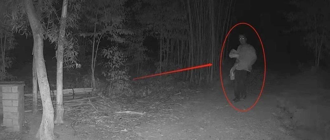 监控曝光!揭西某鸡场一夜间被偷几十只老母鸡……