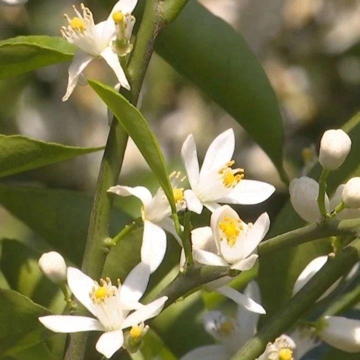 清明时节赏花何处去?揭西这里花正盛开等着你!