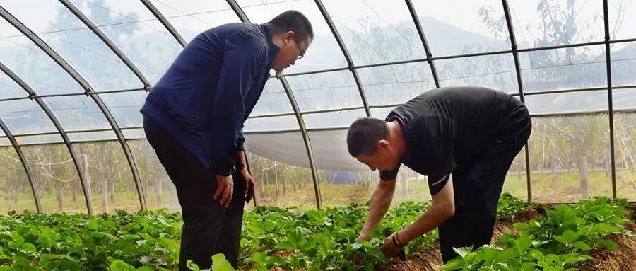 阳泉市盂县上社镇:多产联动发展推进乡村振兴