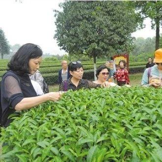 看过来看过来!第四届茶博会在夹江县举行啦!
